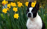 Spring Action : Acupressure Enhances Canine Fitness