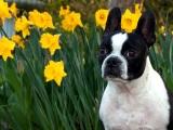 Spring Action : Acupressure Enhances CanineFitness