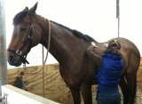 Equine Arthritis : Ease the Pain & Slow it Down with Acupressure