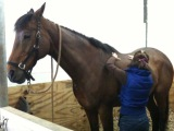 Equine Arthritis : Ease the Pain & Slow it Down withAcupressure