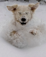 Winter Poses Risks for your Canine Friend!