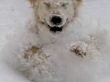 Winter Poses Risks for your CanineFriend!